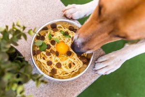 dog eating bowl of food